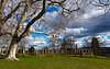 Stuttgart - Rosensteinpark on February (++sepp++) Tags: park winter clouds germany landscape deutschland europa europe cloudy stuttgart wolken february landschaft wolkig badenwürttemberg platanen rosensteinpark