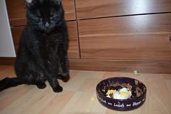 Samanta - 10.01.2015 (GoldstadtTV) Tags: pet black cat katze schwarz samanta  schwarze