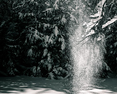snow at arrowhead (mira g (northy)) Tags: trees snow ontario arrowhead