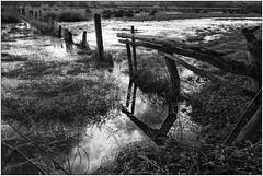 After the rain (Wayne Interessiert's) Tags: field landscape weide wolken prairie nuages paysage landschaft campagne inondation louds saule wasserspiegelung waterreflexion riverruhr überschwemmungsgebiet fwld ragingflood reflexiondeau flussruhr fleuveruhr