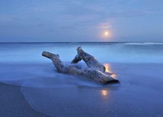 Full moon rising over the drifting tree. (Jill Bazeley) Tags: ocean moon beach long exposure waves skies force florida air patrick atlantic driftwood moonrise nubes cielos rise base pineda