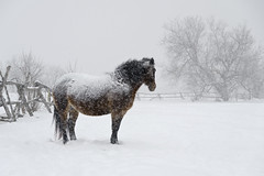 Insulation (Nix Alba) Tags: horses horse nature weather outdoor equine equines