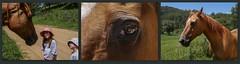 2016-01-19 - The Wonder of a Horse (dangle earrings) Tags: horse reflection eye wonder australia dangleearrings nswthehuntervalley