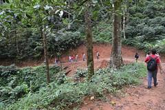 Trekking (mansi-shah) Tags: rainforest farming coorg madikeri forestecology mansishah rainforestretreat jenniferpierce ceptsummerschool