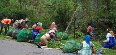 Tea Pickers 051215 (2) (ailognom2005 - Away for a while.) Tags: people india workers kerala peopleindia teapickers