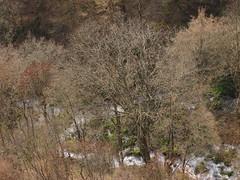 / Mozaic (Deian Vladov) Tags: trees mountain nature leaves montagne river spring europa europe branches arbres bulgaria balkans printemps   feuilles fleuve balkan bulgarie     staraplanina   bulgria    blcs grandbalkan skaklya