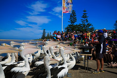 LR-160316-030.jpg (Finert) Tags: theentrance friendlyflickr pelicanfeeding 160316