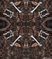 Knochenspiegelung 2 (Weinstckle) Tags: laub spiegelung knochen tierknochen