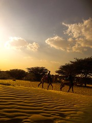 Ride the Desert (sumehrgwalani) Tags: trees sky sun sand desert camels afternoons