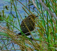 Lake Artemesia, MD (Theo_C82) Tags: maryland manmadelake