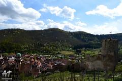 Kaysersberg (AT Photographie) Tags: castle fleurs alsace paysage vignes printemps vosges cerisier remparts bourgeons mdieval kaysersberg vignobles chteau