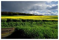 20160424-171547 (lichtschattenjaeger) Tags: yellow landscape gold diesel bio eifel gelb raps biodiesel vulkan getreide gerste weizen benzin hafer biosprit