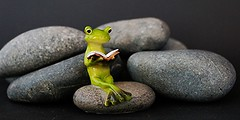 Plenitude on pebbles for Macro Mondays ( Explored) (francepar95) Tags: pebbles frog grenouille cailloux macromondays plenitudemacromondays