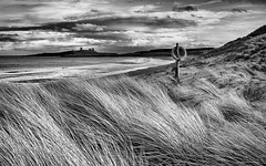 COASTAL-GRASS (petefoto) Tags: winter sunset sea cloud coast lifebelt dunes northumberland filters marramgrass dunstanburghcastle embleton nikond810