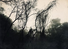 Zauberwald III (michaela.meerkatz) Tags: wood trees wild mist nature fog blackwhite hiking magic dreamy conero adria ancona sirolo monteconero