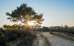 Sun is setting (apersyannick) Tags: park sunset sky sun tree nature landscape evening belgium clear filter national hoge heide kalmthout venen polarising reservaat grenspark