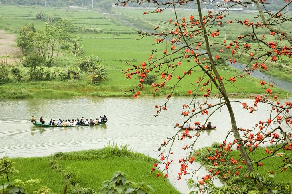 Hoa gạo chùa Hương