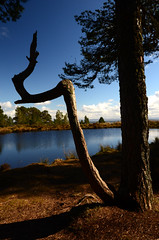 Turn (megalithicmatt) Tags: tree branch lochan alness fyrish cnocfyrish