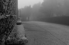 gone (pelzwanze.) Tags: park fog sony sicilia erice