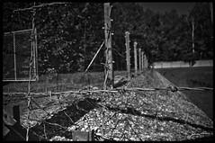 Barbed Wire (- Fabrizio -) Tags: old travel camp blackandwhite wire nikon shot explorer poland campo auschwitz barbed viaggio polonia biancoenero lager birkenau filo storia prospettive spinato filospinato concentramento urbanexplorer d5000 nikond5000