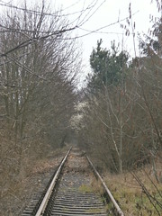 Reste Gterstrecke Teltow 2016 - 44 (Abandoned-Stillgelegt Berlin) Tags: railroad trees tree abandoned train germany deutschland bush track tracks railway bushes bume brandenburg baum gleise busch ballast gleis bahnstrecke stillgelegt trackbed teltow bahndamm schotter schwellen bsche b landbrandenburg betonschwellen bahnbergnge holzschwellen betonschwelle holzschwelle altebahnstrecke gterstrecke stadtteltow ehemaligegterstrecke ehemaligebahnstrecke