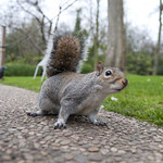 "Curious fearless squirrel • <a style=""font-size:0.8em;"" href=""http://www.flickr.com/photos/28211982@N07/26464053281/"" target=""_blank"">View on Flickr</a>"