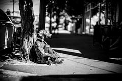 MONO6883 (H.M.Lentalk) Tags: life street leica city people urban white black monochrome 50mm oz sydney australian australia m noctilux aussie 50 asph f095 typ 246 095 noctiluxm 109550
