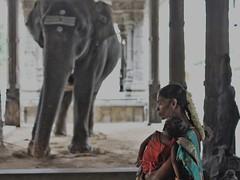Tiruvannamalai temple (goa974) Tags: woman baby india elephant temple nikon south tamil nadu rukku tiruvannamalai 35mm18 d7100 aruchanala