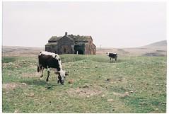(tayn3) Tags: city travel film 35mm turkey ancient ruins cows capital olympus ishootfilm monastery 200 armenia silkroad historical fujifilm ani olympusom2 om2 ruined fujicolor 2016 superia200 om2n aniruins traveldeeper