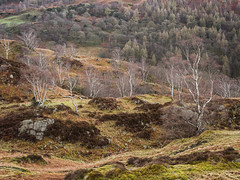 Holme Fell (Damian_Ward) Tags: trees mountains photography lakedistrict cumbria fells nationaltrust lakeland fell cumberland thelakes holmefell damianward damianward
