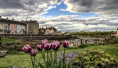 Not quite Summer yet in Somerset (Jon_Wales) Tags: flowers summer england weather spring tulips harbour somerset pill