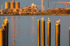 Birds (Infomastern) Tags: sunset sea water malm vatten hav solnedgng sibbarp
