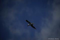 _DSC0499 (chris30300) Tags: france heron de pont parc oiseau camargue gau saintesmariesdelamer flamant provencealpesctedazur ornithologique