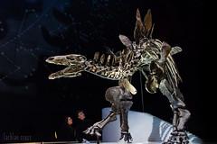 Natural History Museum - Stegosaurus (lachlancross) Tags: london skeleton fossil nikon dinosaur stegosaurus naturalhistorymuseum earthhall