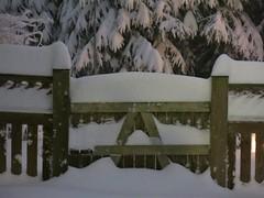 back fence gate ~ HFF! (karma (Karen)) Tags: trees snow home backyard gates fences maryland baltimore blizzard 4winter hff fencefridays