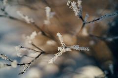 (DrowsyPotato) Tags: winter 35mm frozen frost sweden bokeh f14 sony frosty 350 100 sverige mm fe za jmtland norrland swe 16400 bokehlicous 14 ilce7rm2