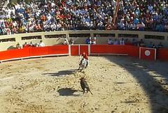 Pablo Hermoso de Mendoza, rejoneador (anieto3) Tags: bullfight plazadetoros corridadetoros rejones rejoneador fiestabrava pablohermosodemendoza