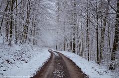 A walk in the snowy Forest. (andreasheinrich) Tags: trees winter cold forest germany deutschland snowy path january hills kalt wald bäume weg schneebedeckt hügel badenwürttemberg neckarsulm nikond7000