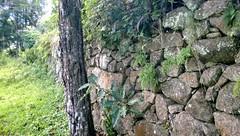 Antigo Muro de Arrimo (Click do Rato) Tags: pelotas rs