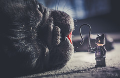 Controlling the Beast (little ju !) Tags: dog lego minifig dccomics catwoman whiplash minifigure bouledoguefranais