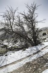 Al sol de invierno (llorenspilar) Tags: winter espaa naturaleza contraluz arbol andaluca nieve granada invierno