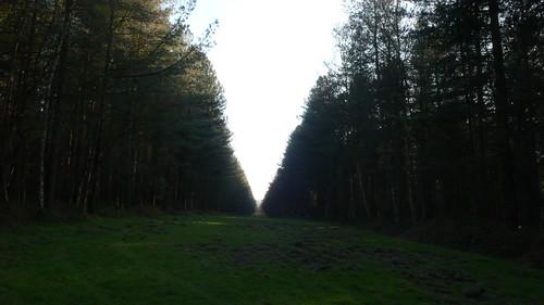 Canteleu - Promenade en forêt de Roumare à la fin de l'hiver