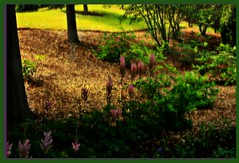 The Seasons (Lynn English) Tags: flowers light blur green happy spring seasons ps effect