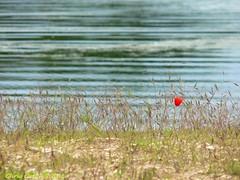 Like a peal of laughter (Chris Coeur) Tags: prayer shore poppy meditation spirituality coquelicot orilla rive amapola espiritualidad spiritualit mditation oracin meditacin prire chriscoeur