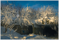 Light and shade (ezhikoff) Tags: winter snow tree