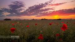 Sea Of Poppies (Nick Brundle-Photography) Tags: sunset red summer nature clouds landscape denmark poppy poppies wildflowers remembranceday remembrance ndfilter cornflowers graduatedfilter leefilters canoneos70d canon1585mmusmlens