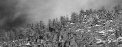 Parco Nazionale dello Stelvio (kmclaudio) Tags: landscape panoramica neve inverno montagna paesaggio infrarosso abeti valsavarenche larici parcodellostelvio pentaxart