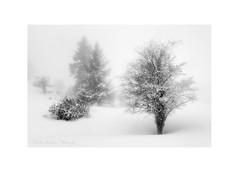 Winter solitude III (Christos Andronis) Tags: winter light snow mystery blackwhite solitude quiet meditation softlight contemplation landscapephotography χιόνι γαλήνη βράχια χειμώνασ