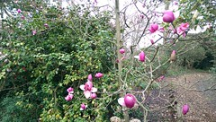 Bourne Hill Gardens Easter 2016 (The Lilac Bonzai) Tags: flowers gay england india storm cold flower tree bunny green church statue stone pine bug garden easter sussex pier starwars spring pond gate horns willow ladybird jabba yew pan slate ram gilded flint magnolias saxon stormtrroper hovemuseam