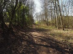 potteric carr path (Johnson Cameraface) Tags: tree march spring path olympus f28 doncaster southyorkshire em1 2016 yorkshirewildlifetrust ywt 1240mm micro43 pottericcarrnaturereserve mzuiko johnsoncameraface omde1